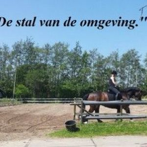 Paardenpension Dyma image 3