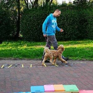 Hondentraining Noord-Holland image 2