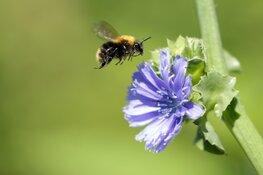 Ode aan insecten tijdens eerste open stal zondag in Aartswoud