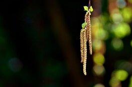 Hooikoorts kan voor verwarring zorgen tijdens coronacrisis