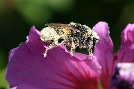 lezing over insecten in de tuin in rundveemuseum